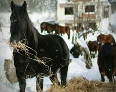 Proizvodne mogućnosti i hranjiva vrijednost krmiva za ishranu stoke u planinskom području Republike Srpske, prof. dr Vojo Radić